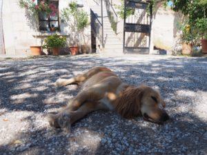 トルコ カッパドキア 犬